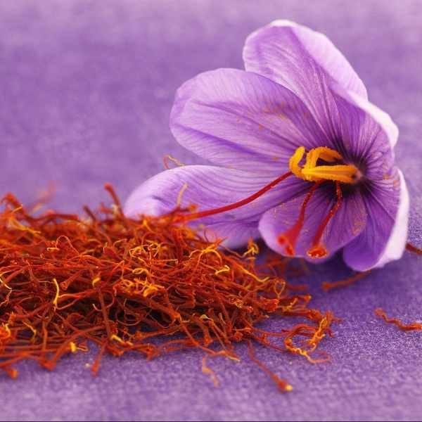 crocus and saffron filaments